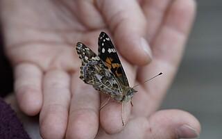 Hand Schmetterling Verantwortung | AK Evangelium und gesellschaftliche Verantwortung